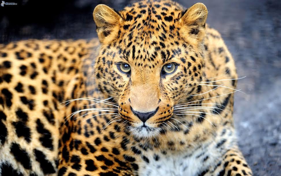 animalier4